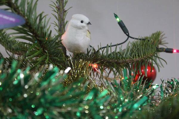 Christmas Trees Ymca Dublin