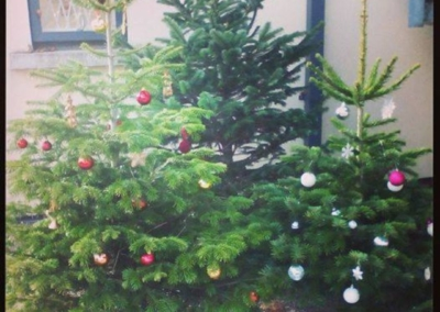 ymca-dublin-get-involved-christmas-tree_1