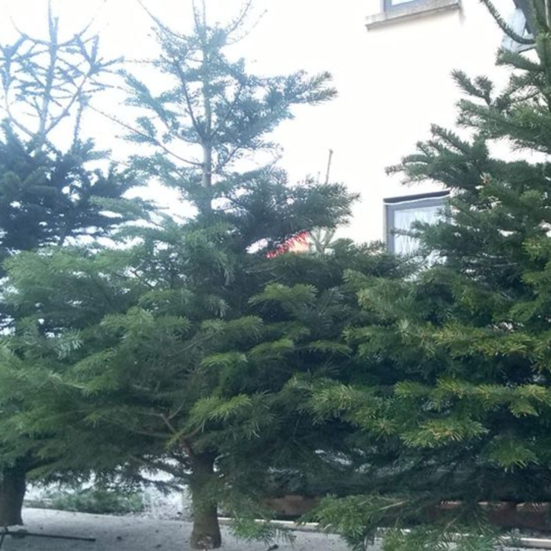 ymca-dublin-get-involved-christmas-tree_11