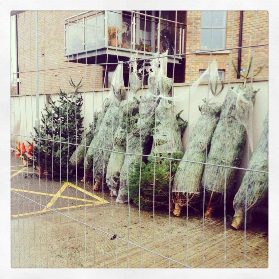 ymca-dublin-get-involved-christmas-tree_2