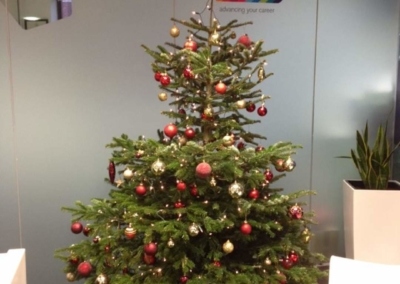 ymca-dublin-get-involved-christmas-tree_6
