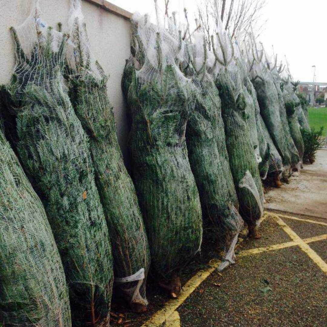 ymca-dublin-get-involved-christmas-tree_7