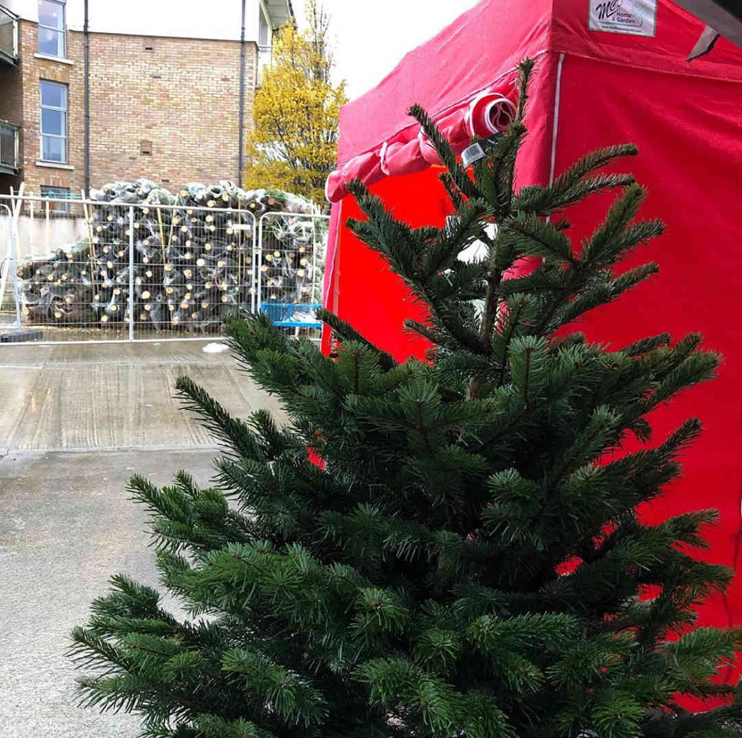 Christmas Tree Fundraiser | YMCA Dublin
